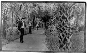 historic photo of sidewalk lines with palm trees. 3 men standing along the sidewalk