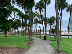 modern photo of sidewalk lined with tall palm trees. river visible in background
